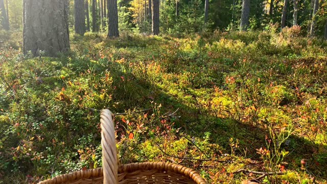 wicker basket in the forest on a sunny day