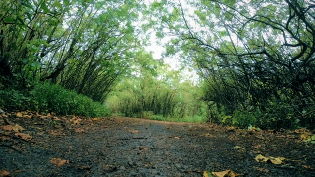 vidéos et rushes de bordée de vue grand angle du sentier de randonnée le long de l'arbre des forêts tropicales - couleur saturée