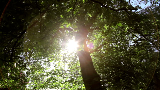 Wide dolly shot of sunlight through green leaves