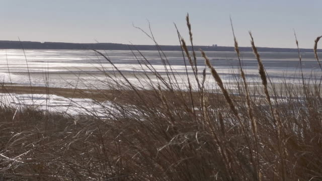 Wide pan of a windy, desolate, beach video