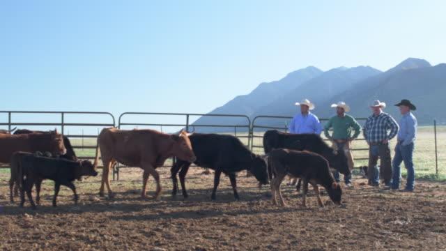 vídeos de stock, filmes e b-roll de todo tiro de pecuaristas de manhã cedo no trabalho - animais da fazenda