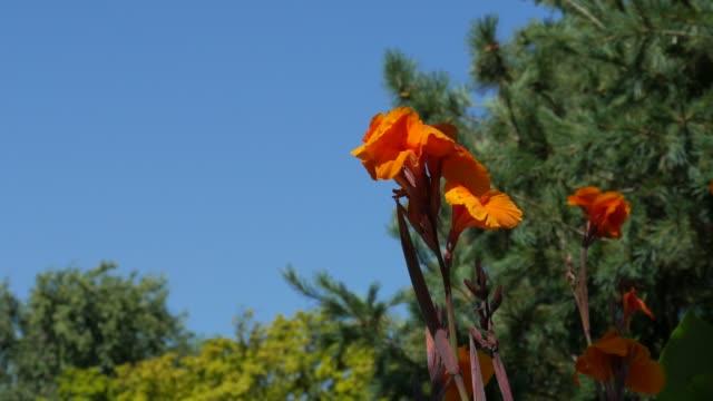 Wide shot of bright orange flowers video