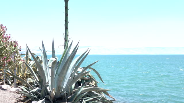 Wide Shot of Succulents Next to Sea of Galilee video