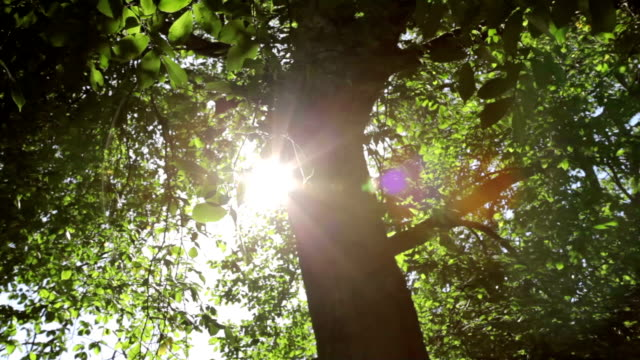 Wide shot of sunlight flare through leaves in the breeze video