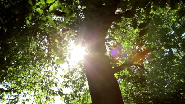 общий солнечный свет вспышки через листья в бриз - дуб стоковые видео и кадры b-roll
