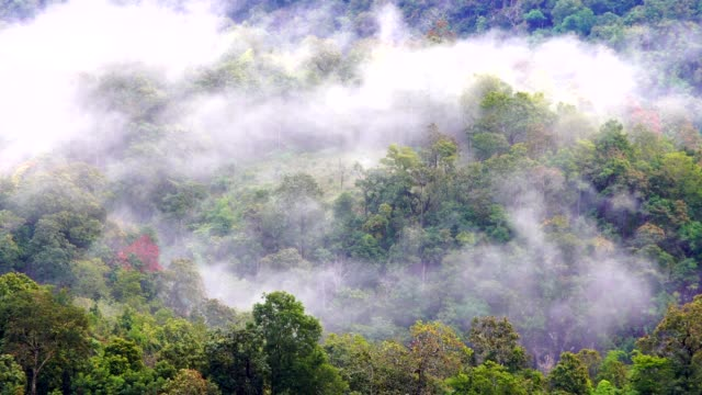 Wide shot on tropic rainforest jungle flowing over Mountains, mist, fog, rain, clouds move,Green landscape. 4K footage. video