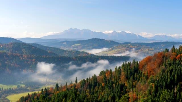 wide view of beautiful autumn landscape. - дубовый лес стоковые видео и кадры b-roll