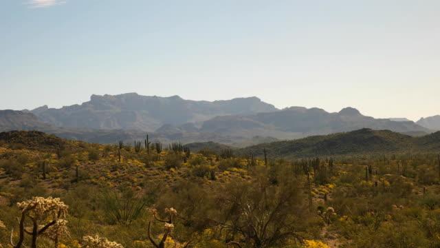 アリゾナ州のソノラ砂漠に生えるサボテンの広い視野 - オコティロサボテン点の映像素材/bロール