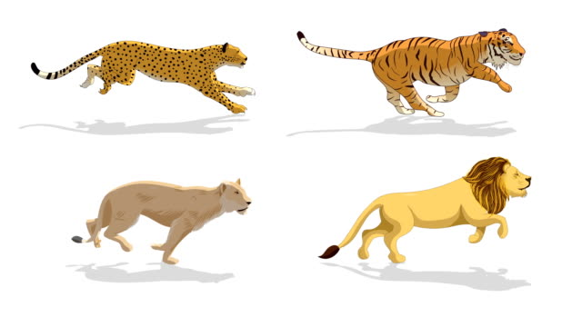 Wild Animals Running Animation