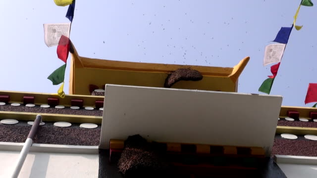 wild ape sul tempio buddista in lumbini, nepal - torace animale video stock e b–roll