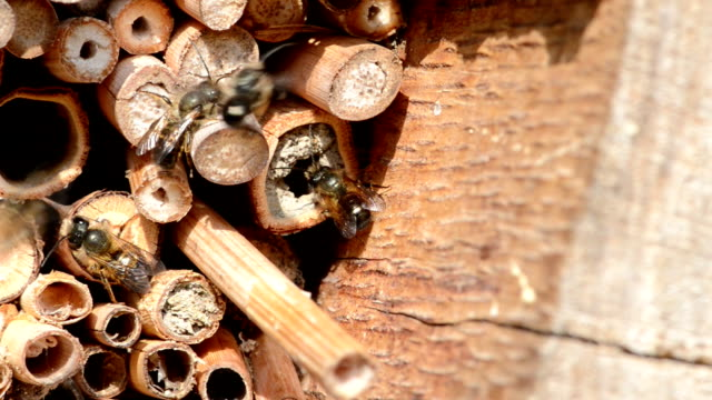 vilda bin flyger framför insekt hotel i springtime - bi insekt bildbanksvideor och videomaterial från bakom kulisserna