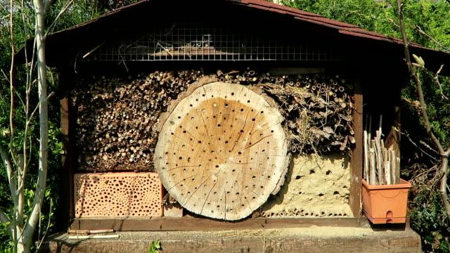 wild bees osmia bicornis på insect box hotel. - bi insekt bildbanksvideor och videomaterial från bakom kulisserna