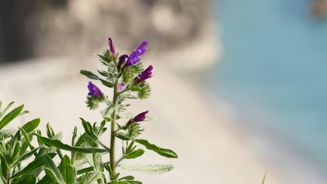 Wild bell flower swaying in wind. video