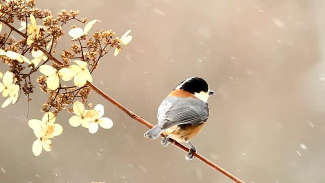 野生の鳥 - 冬点の映像素材/bロール