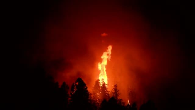 stockvideo's en b-roll-footage met wild fire - bosbrand