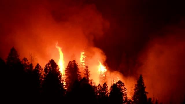 vidéos et rushes de incendie sauvage - desastre natural