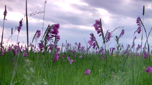 Wild flowers. video