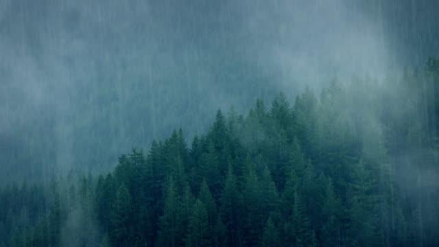 wild-wald im starkregen - vancouver kanada stock-videos und b-roll-filmmaterial