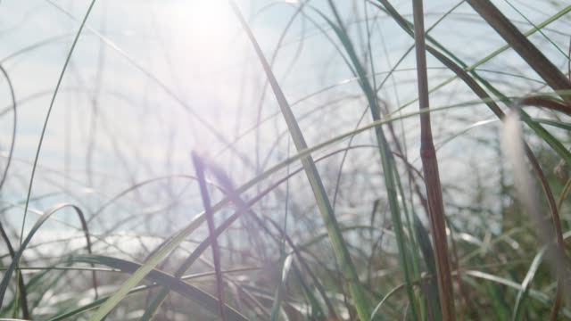 wild grass close up - lama oggetto creato dall'uomo video stock e b–roll