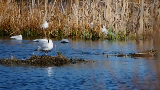 Wild gulls nest on water bumps.