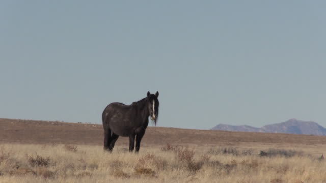 wild horse in the utah desert - equino video stock e b–roll