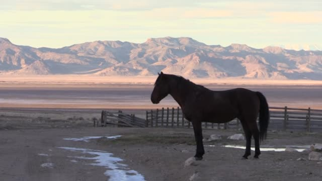 wild horse stallion in winter in utah - мустанг стоковые видео и кадры b-roll