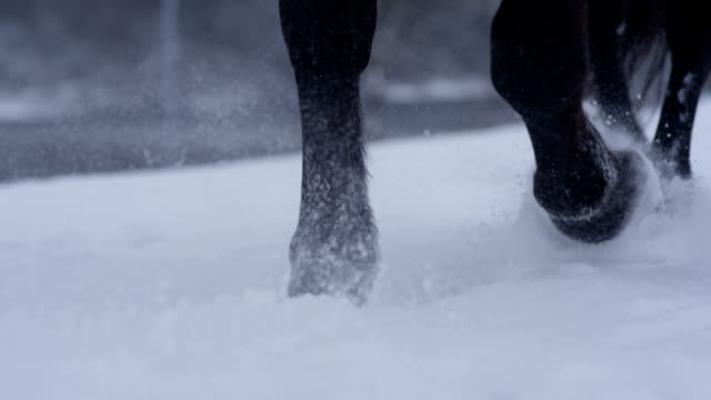 SLOW MOTION CLOSEUP: Wild horse walking through deep snow blanket in cold winter video