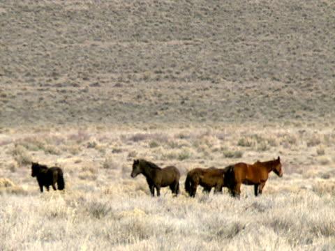 stockvideo's en b-roll-footage met wild horses 05 - natuurgrond