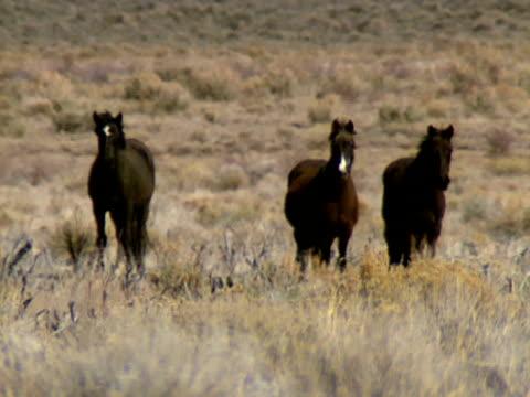 stockvideo's en b-roll-footage met wild horses 06 - natuurgrond