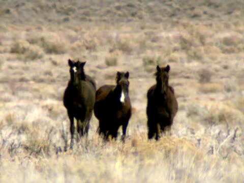 dzikie konie 08 - grzywa filmów i materiałów b-roll