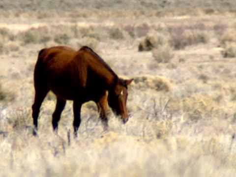 dzikie konie 12 - grzywa filmów i materiałów b-roll