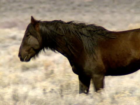 dzikie konie 19 - grzywa filmów i materiałów b-roll