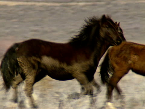 Wild Horses 30 A group of wild horses trot across dry foothills near Reno, Nevada. mustang wild horse stock videos & royalty-free footage