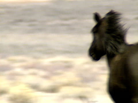 Wild Horses 32 A group of wild horses move across the foothills near Reno, Nevada. mustang wild horse stock videos & royalty-free footage