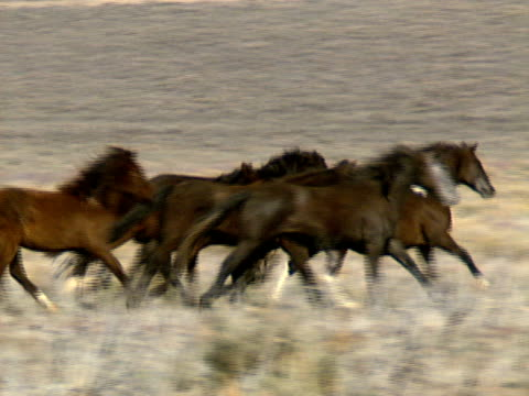 Wild Horses 33 A group of wild horses galloping in the mountains near Reno, Nevada. mustang wild horse stock videos & royalty-free footage