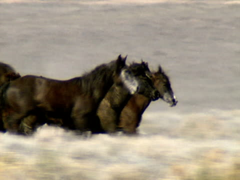 Wild Horses 38 A herd of wild horses gallop across the foothills near Reno, Nevada. mustang wild horse stock videos & royalty-free footage