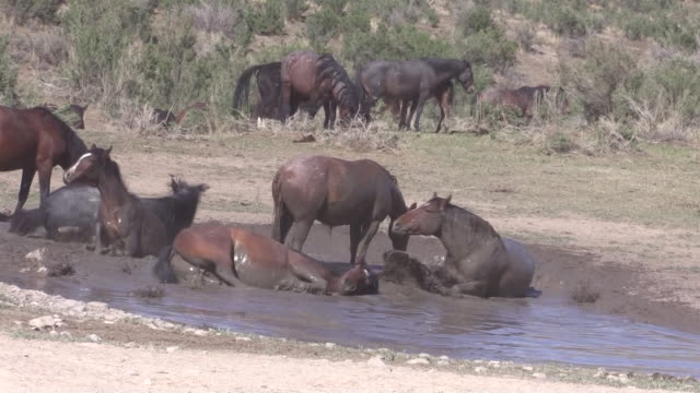 Wild Horses at a Waterhole in the Utah Desert video