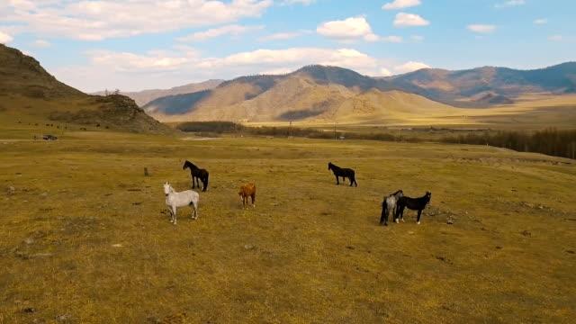 wild horses herd running on meadow - stallone video stock e b–roll