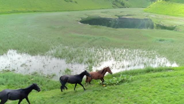 wild horses herd running - mandriano video stock e b–roll