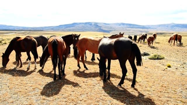 wild horses in patagonia video