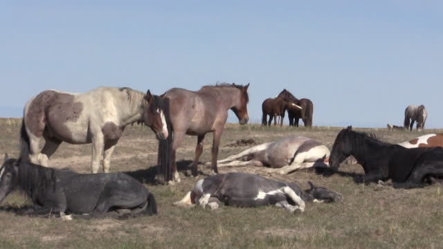 Wild Horses in Spring in Utah - video