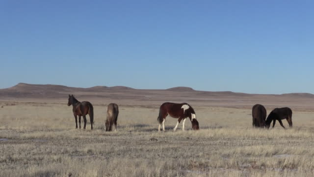 wild horses in the utah desert - equino video stock e b–roll