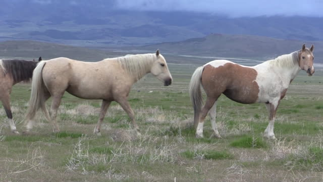 wild horses in the utah desert - мустанг стоковые видео и кадры b-roll