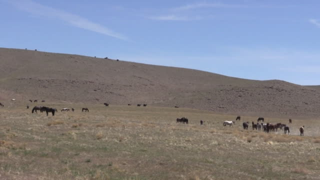 Wild Horses in the Utah Desert video