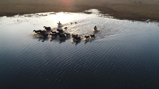 wild horses of anatolia aerial view - animale selvatico video stock e b–roll