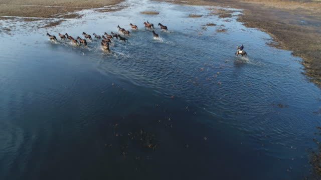 Wild Horses of Anatolia aerial view Wild Horses of Anatolia ,running in water aerial view mustang wild horse stock videos & royalty-free footage
