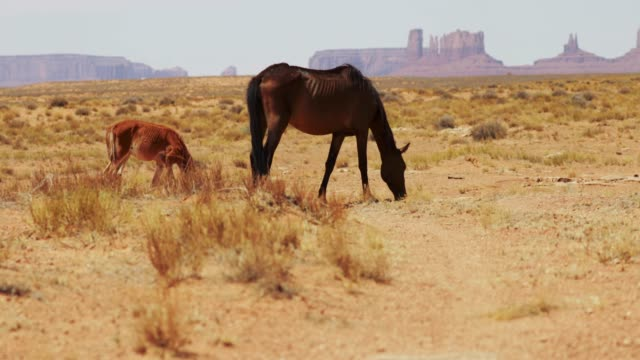 wild horses of the monument valley - equino video stock e b–roll