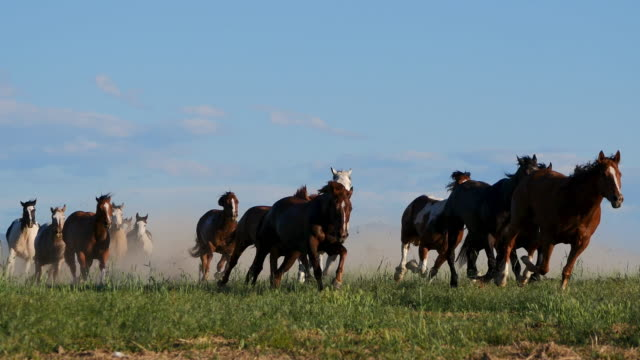 wild horses running in nature in america - mustang video stock e b–roll