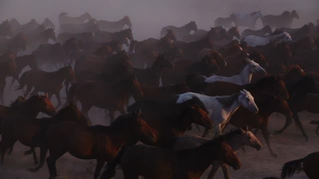 vidéos et rushes de chevaux sauvages en cours d'exécution - animaux à l'état sauvage