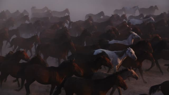 wild horses running - animale selvatico video stock e b–roll